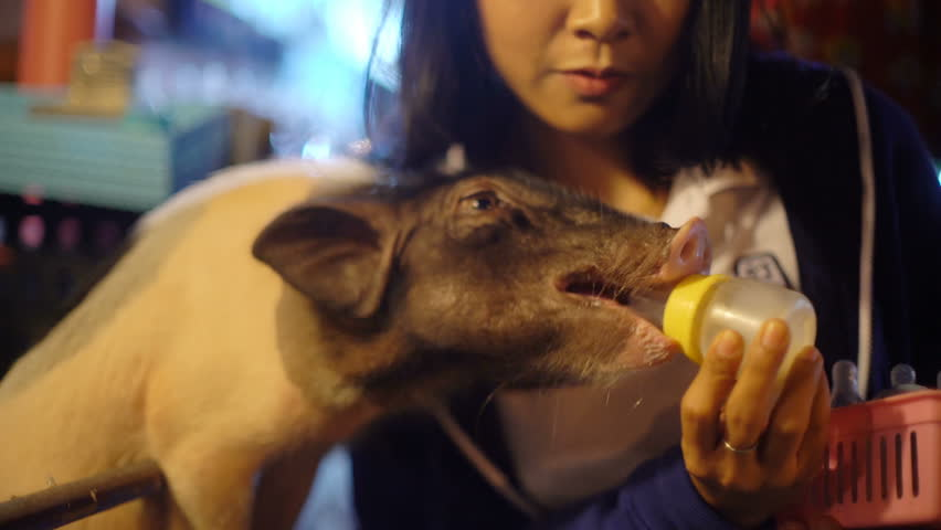 Happy Asian Girl feeding piglet with milk from a bottle 4k UHD (3840x2160)