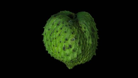 Realistic render of a rotating soursop (graviola) on transparent background (with alpha channel). The video is seamlessly looping, and the 3D object is scanned from a real soursop.