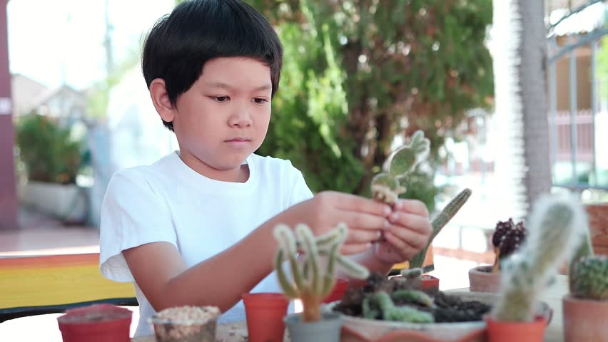children people and home small cactus garden concept - lovely smile boy, eight year old thai or asian kid planting small cactus happily during his holiday activities at his home garden