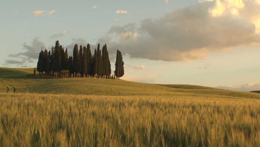 Pan of a group of cypresses as the sun starts to set in the Tuscan Val d'Orcia in the province of Siena, Italy