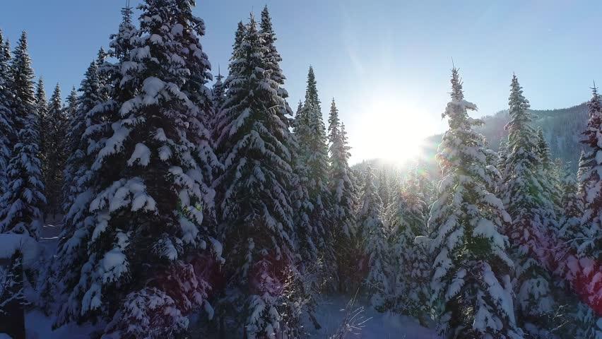 Snow-covered fir forest | Shutterstock HD Video #33699964