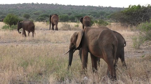Elephants in the Tarangire National Park, Tanzania