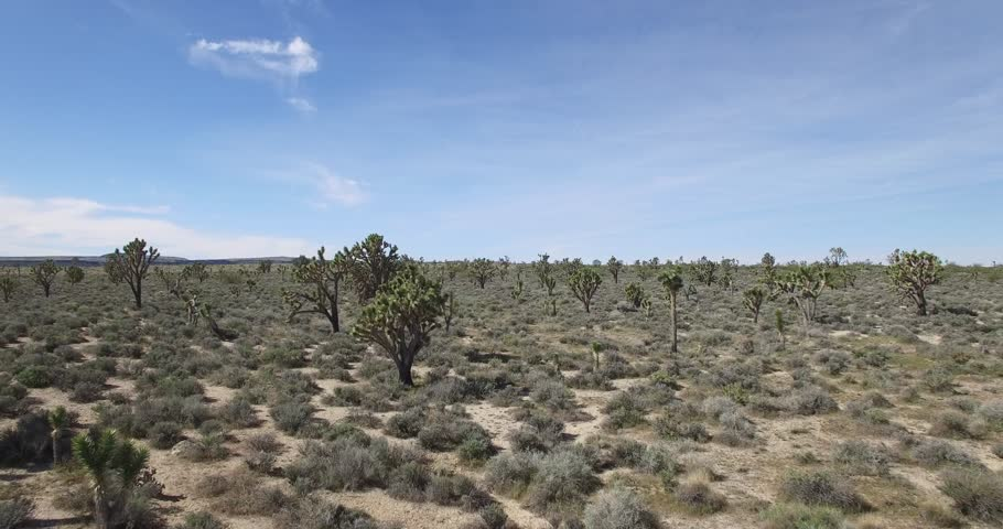 Drone aerial video of Joshua trees in 4k, close and dramatic drone aerial video | Shutterstock HD Video #33953494