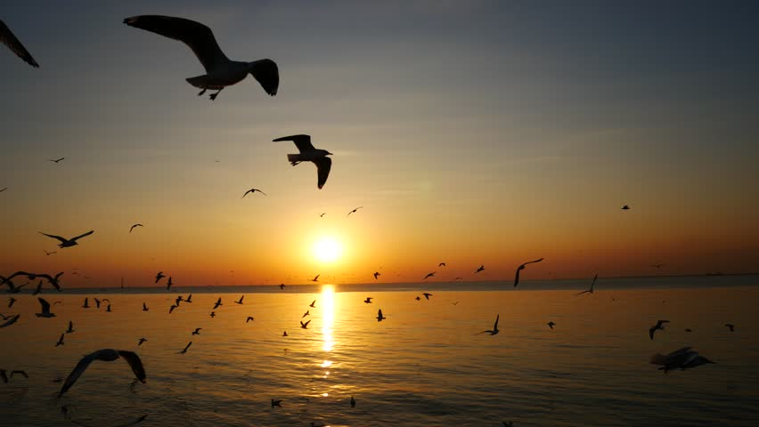 Seagulls are flying and the sunset in the sea. | Shutterstock HD Video #34205854