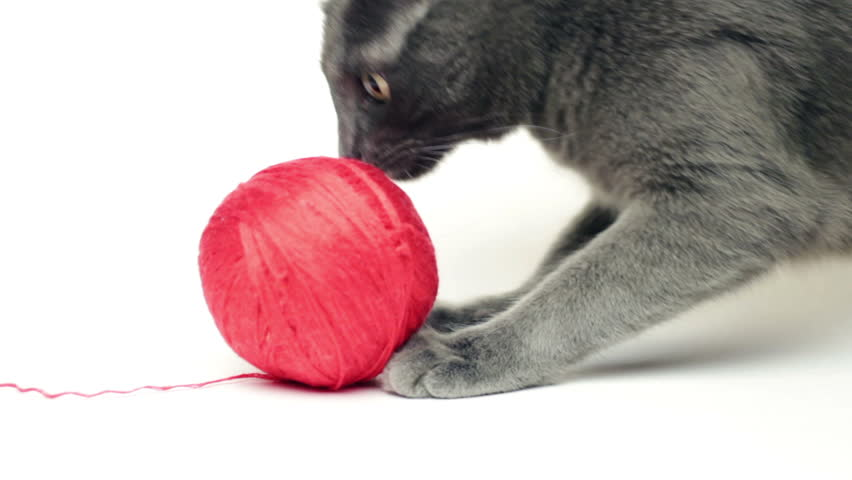 Grey cat playing with red thread ball over white background | Shutterstock HD Video #3438044