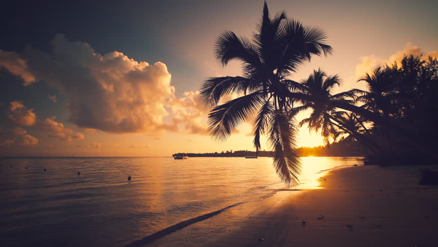 Landscape of tropical island beach and palm tree silhouettes, Punta Cana Dominican Republic