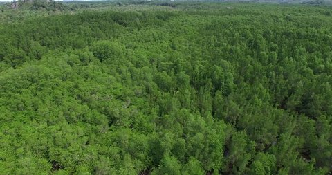 aerial view of mangrove forest at Sabah Borneo, Malaysia. footage