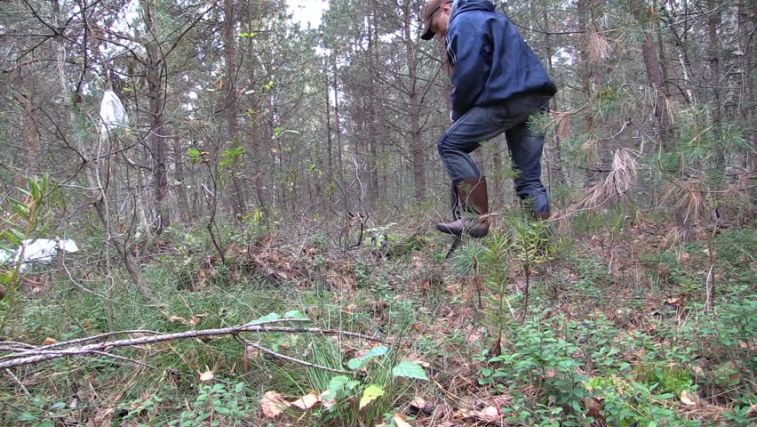 Men dig out with shovel pine tree seedling in forest to pick up and transplant.