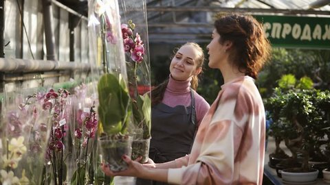 Young smiling female florist in apron helping a female customer to choose a flowerpot with orchid flower. Young woman carefully examines the flower. Slowmotion shot