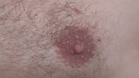 Hairy Male Nipple. Extreme Close Up