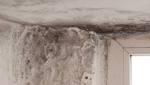 Mold in house on walls, ceiling, windows. Condensation causes mold