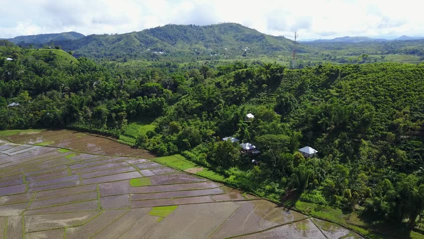 Aerial drone shot Spider Web Rice Fields panorama view and mountain landscape in Flores, Indonesia / Aerial drone shot Spider Web Rice Fields panorama view and mountain landscape in Flores, Indonesia