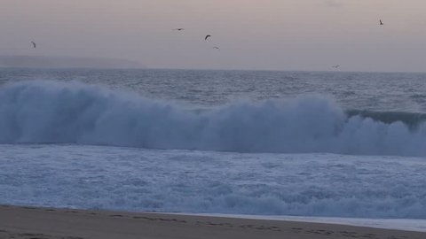 Seagulls flying over the Atlantic ocean with sunset light in the Nazare Beach (Portugal) in the last day of 2017