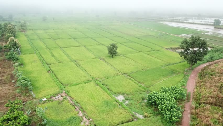 Aerial view from a drone of green rice field in Thailand  | Shutterstock HD Video #34980514