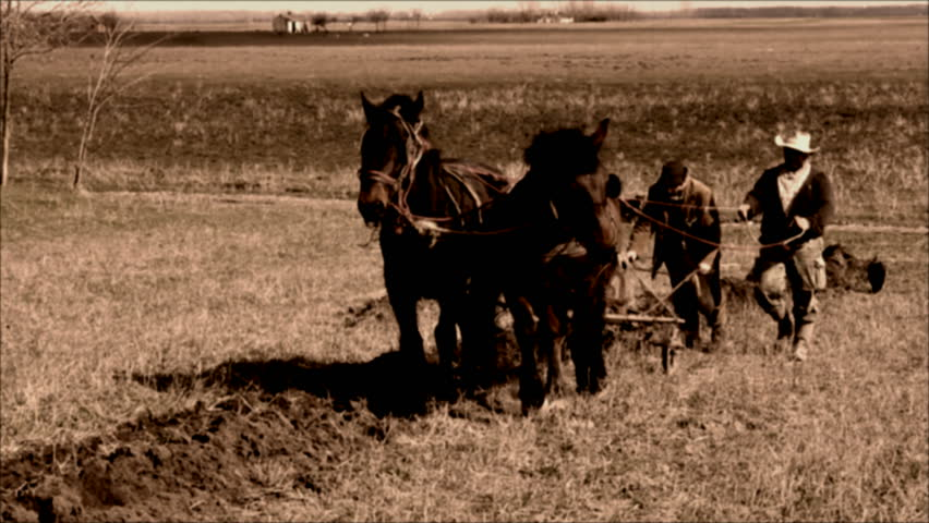 plowing with horses ; plowing with horses that pull a wooden plow  in the old way,video clip processed that looks like an old movie cinema