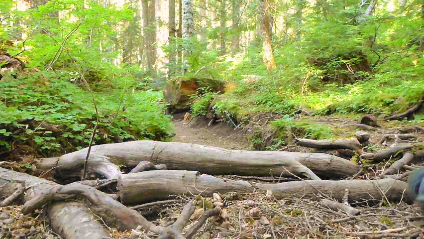 Man hiking away, down rugged path through thick forest and trees in the Pacific