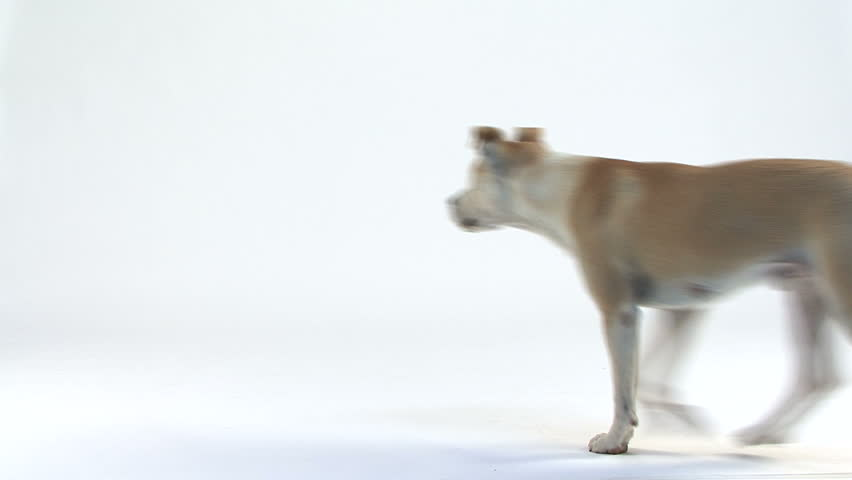 Barking Dog Video Clips