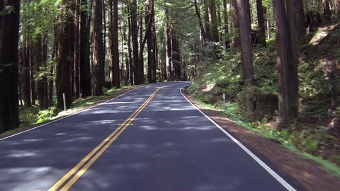 Driving through redwood forest POV fast timelapse. Sequoia National Park Sierra Nevada mountains. Established 1890. 404,063 acres. The park is famous for its giant sequoia trees, worlds largest trees.