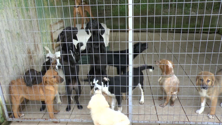 Cute puppies seeking attention in a dog sanctuary