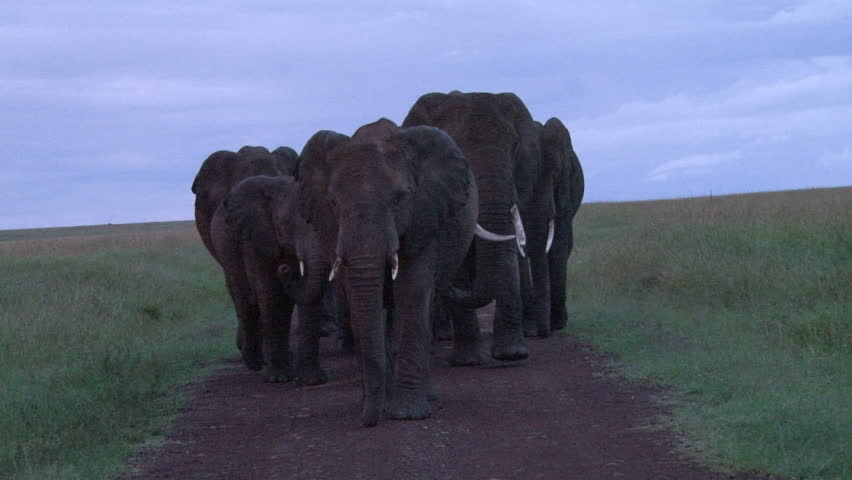 elephants blocking the road during the rains