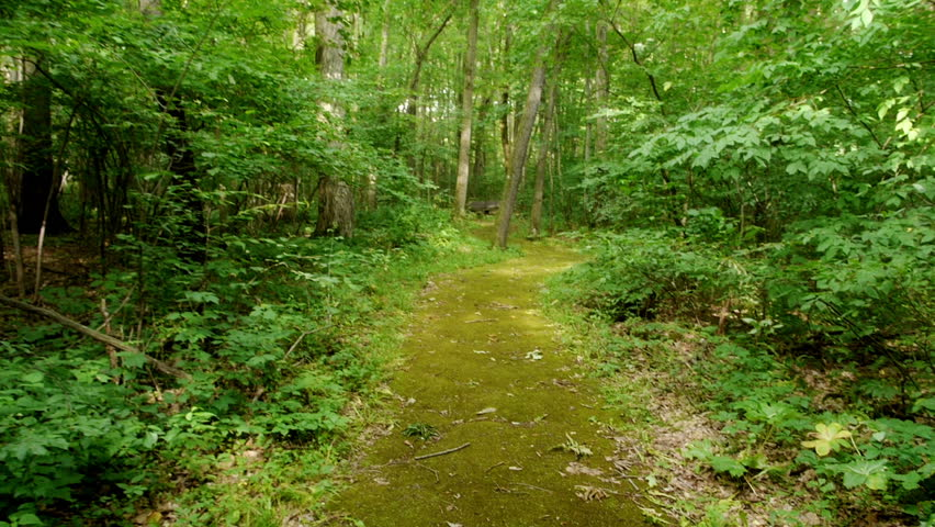 Personal perspective of walking on a path in the forest.