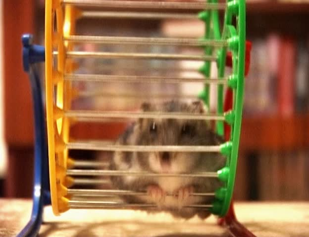 hamster in the wheel