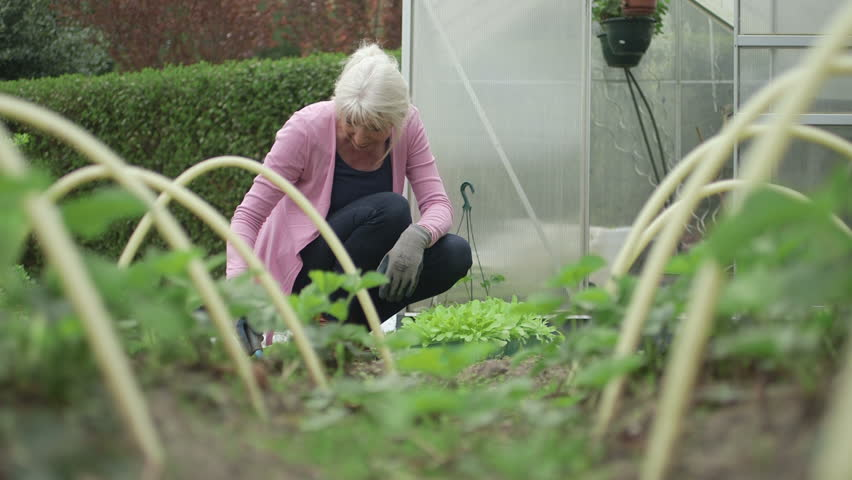 Older woman digging in garden