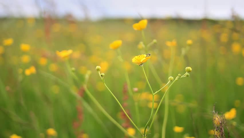 Cinemagraph loop yellow flowers stock footage video 100 royalty cinemagraph loop yellow flowers in the wind motion photo mightylinksfo