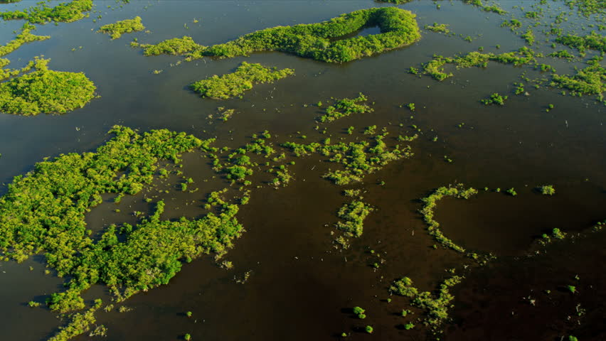 Aerial brown waters within the mangrove thickets are nurseries for fish, mollusc and crustacean larvae that require sheltered environment. | Shutterstock HD Video #4237274