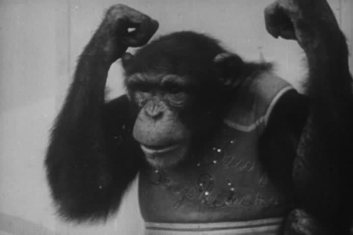 1950s - Hilarious animal antics from the 1950s. | Shutterstock Video #4243079