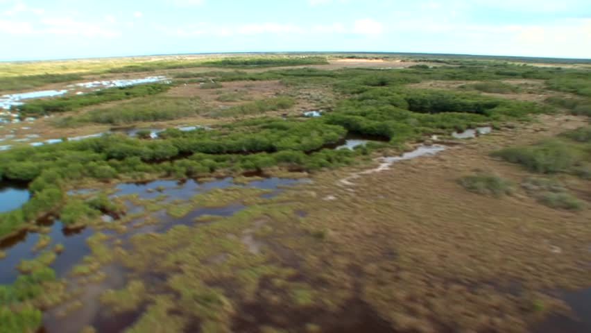 Aerial view of the beautiful Everglades with diverse foliage, lakes, and mangrove forests