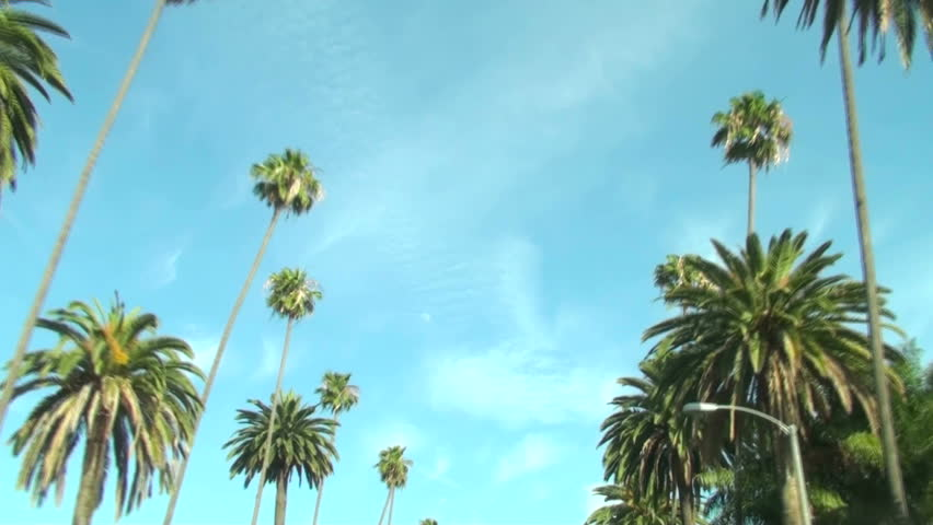 Palm Trees on Beverly Drive