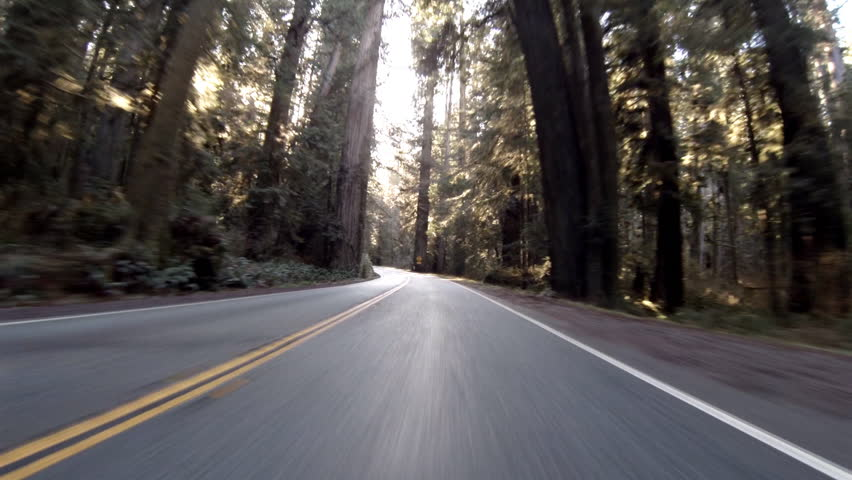 The sun peaks through gaps in the Jedidiah Smith Redwoods State Park, California