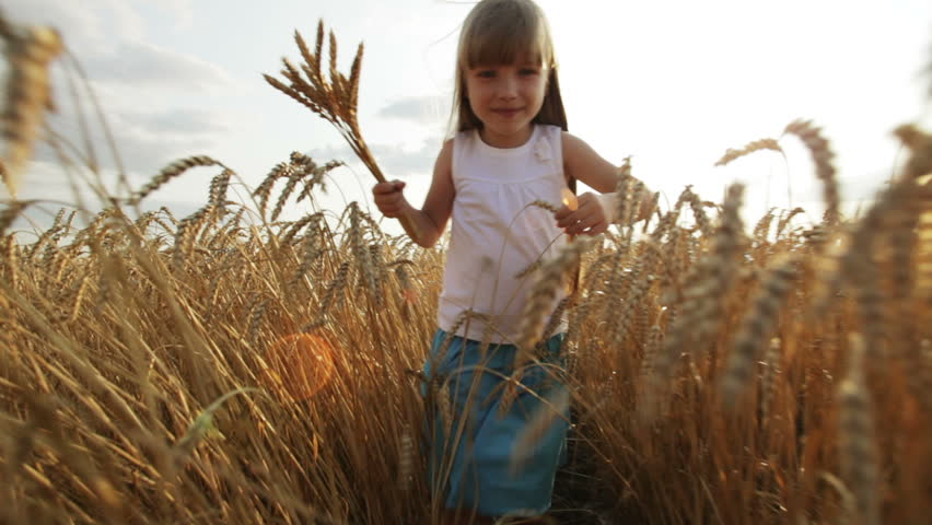 Cute little girl walking through wheat field holding wheat stalks in her hands