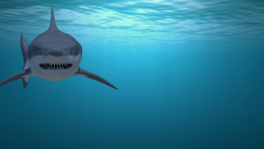 sharks in the ocean image free stock photo public