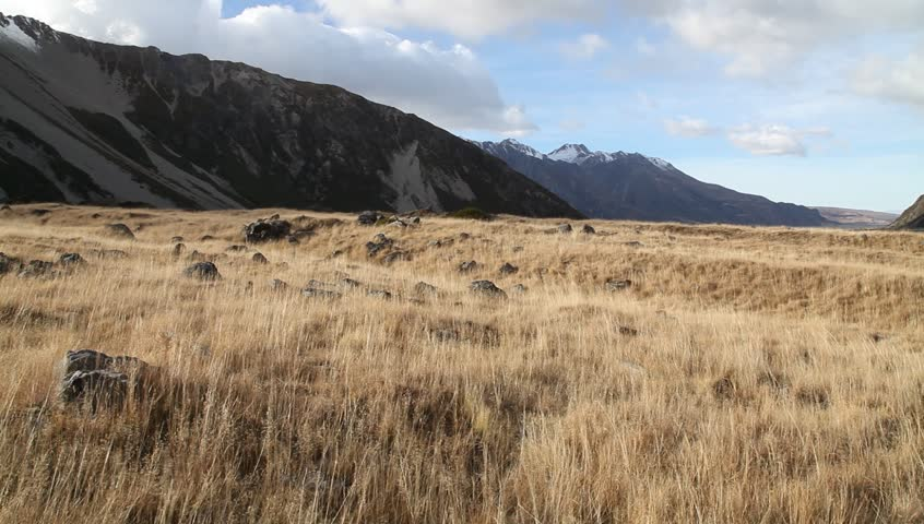 Grassland in Hooker Valley of Aoraki Mount Cook National Park in New Zealand