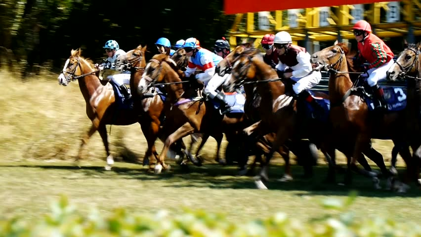 SAARBRÜCKEN - AUG 15, 2013: Horse racing in Germany. Part 6. Starting gate