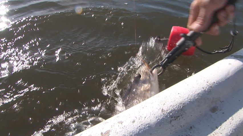 Fisherman catching Redfish in Louisiana Marsh post Hurricane Katrina