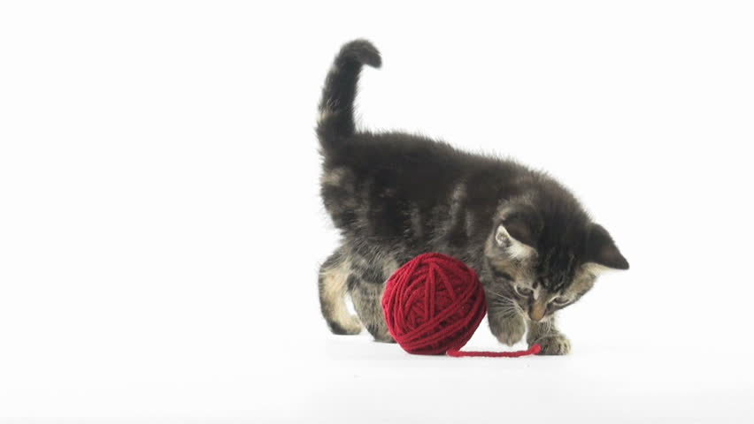 Cute baby tabby American shorthair kitten playing with a red ball of yarn on white background #4546613