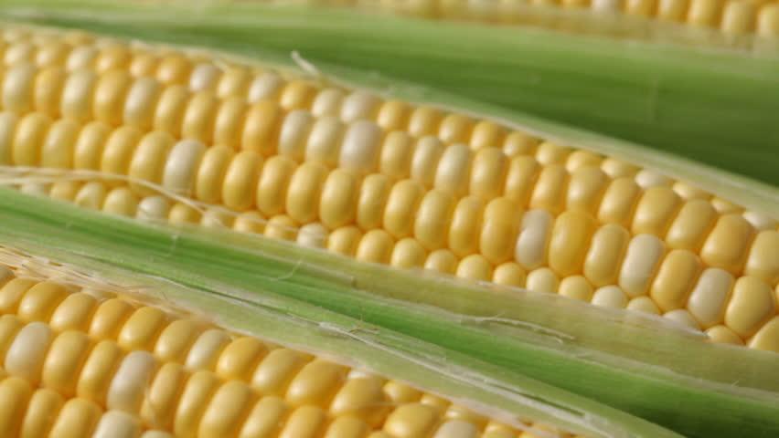 Fresh corn on the cob | Shutterstock HD Video #4587554
