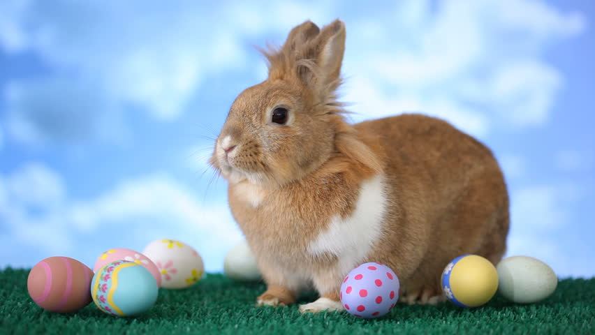 Easter bunny with eggs | Shutterstock Video #4632842