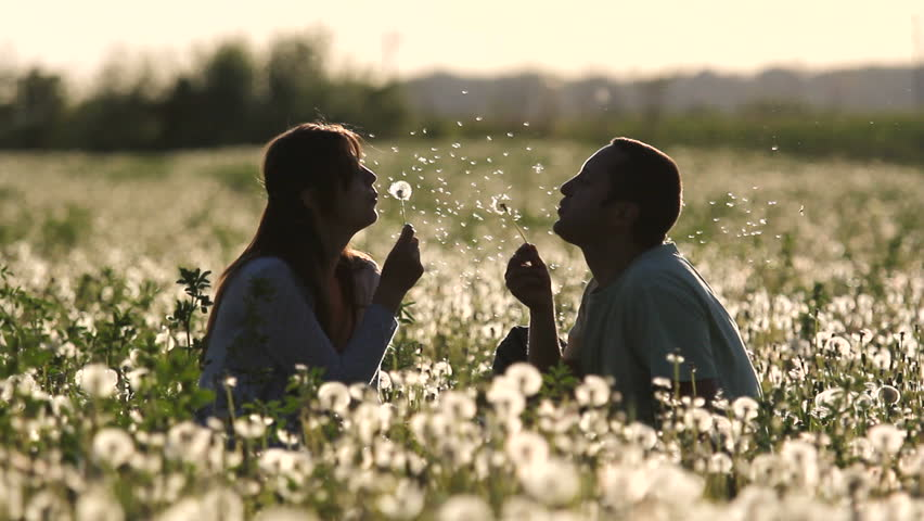 Young parents play in dandelion flourish field, baby come to parents at sunset | Shutterstock HD Video #4709654