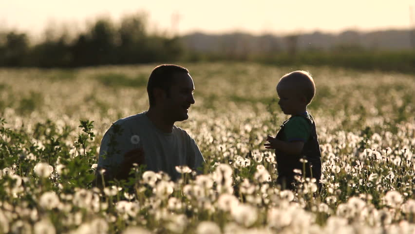 Funny moments, father and son blow a dandelion at sunset in flourish field