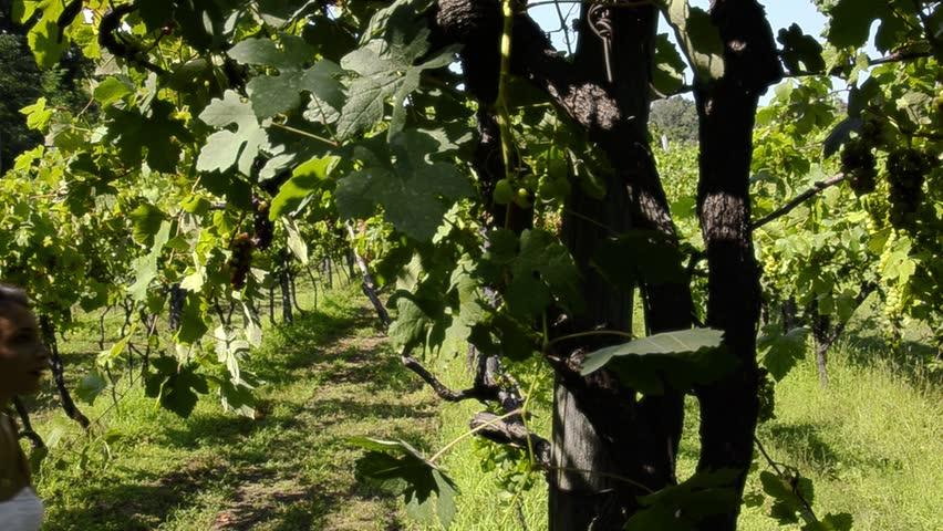 Girl in a vineyard | Shutterstock HD Video #4776914
