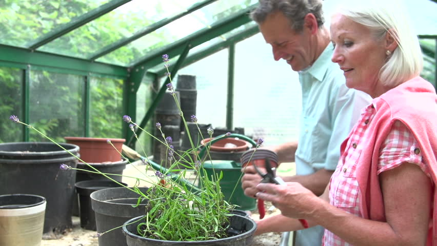 Older woman trims lavendar plant while husband cleans pots in greenhouse