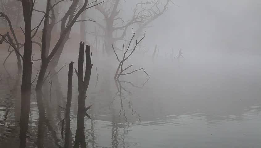 dead tree stem in the lake under mist