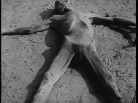 1940s - Footage of Belsen Nazi Concentration Camp victims.