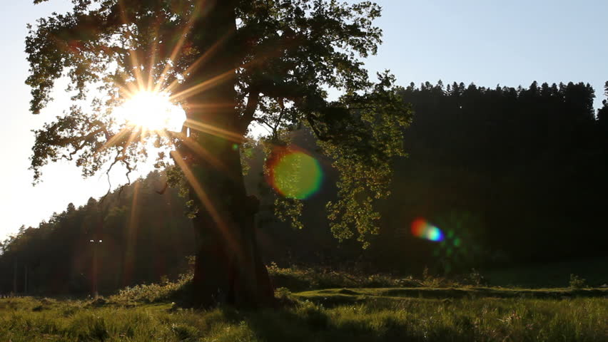Sun energy, powerful sun rays shine through strong oak tree branches