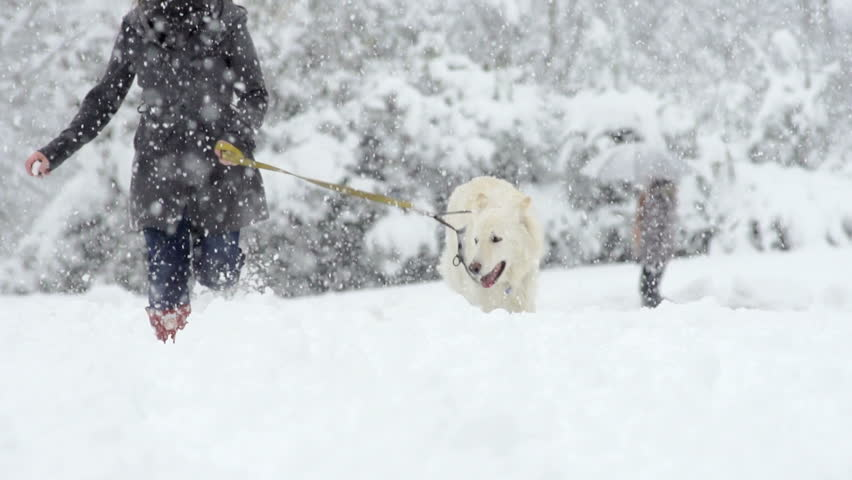 Spectacular Slow Motion Of White Swiss Shepherd Dog Running Through High Snow Straight Towards The Camera | Shutterstock HD Video #5057519