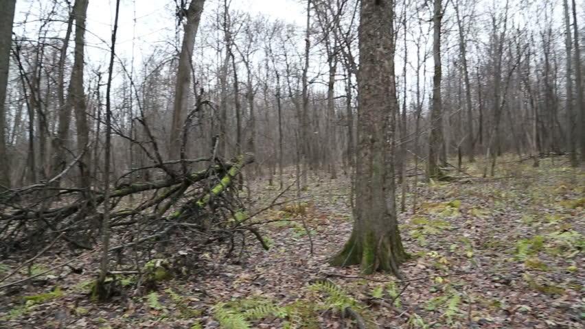 bare wood scene 1